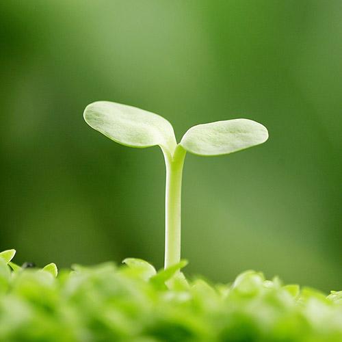 sostenibilidad3